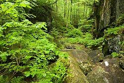 Devil's Gulch in Eden, Vermont.  The Long Trail.  Green Mountains.  Summer.