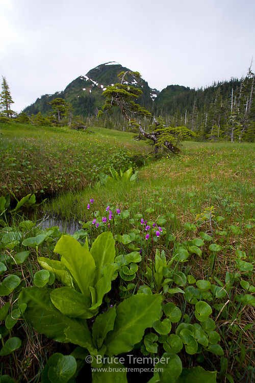 Henny Ridge trail near Cordova, Alaska