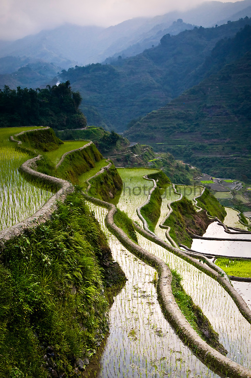 PHILIPPINES (Banaue, .Province of Ifugao). 2009. Rice terraces near Banaue..