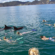 Dolphin Encounters Bay of Islands