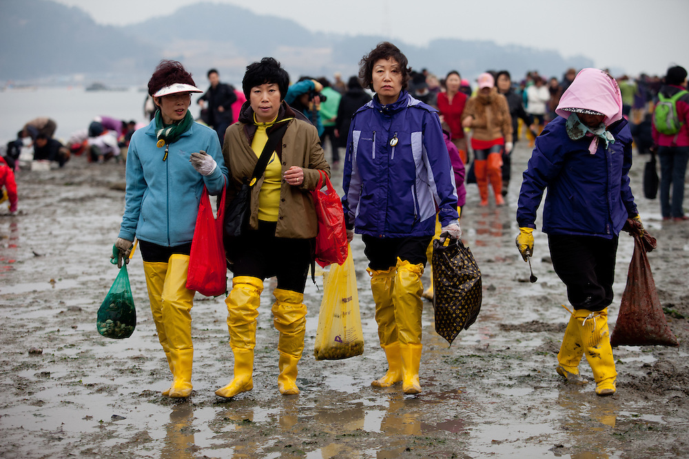 "Women with bags of collected mussels and seaweet on the open ""Mysterious Sea Road"" at Hoedong shore (Jindo island). Jindo is the 3rd biggest island in South Korea located in the South-West end of the country and famous for the ""Mysterious Sea Route"" or ""Moses Miracle"". Every spring thousands flock to the shores of Jindo to walk the mysterious route that stretches roughly three kilometers from Hoedong to the distant island of Modo. Materializing from the rise and fall of the tides, the divide can reach as wide as forty meters."