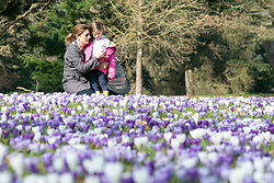 © Licensed to London News Pictures. 11/03/2015. Kew, UK. A young woman and girl (NAME NOT GIVEN) enjoy looking at the display.People enjoy the crocus displays at Kew Garden's today 11th March 2015. The display features the variety Crocus tommasinianus. The Uk has enjoyed warm sunny weather this week.  Photo credit : Stephen Simpson/LNP