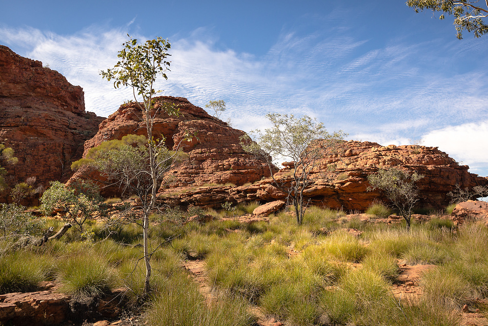 Lone tree and red rock wall at Kings Canyon