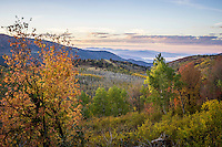 The last remaining Fall colors spread through the canyon along the Nebo Loop in Utah's Wasatch Mountains.