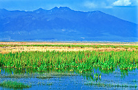 Wetlands area of the Alamosa National Wildlife Refuge.  Blanca Peak of the Sangre De Cristo Mountains in the distance.  San Luis Valley, Colorado.