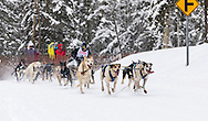 Musher Danny Beck competing in the Fur Rendezvous World Sled Dog Championships at Goose Lake in Anchorage in Southcentral Alaska. Winter. Afternoon.