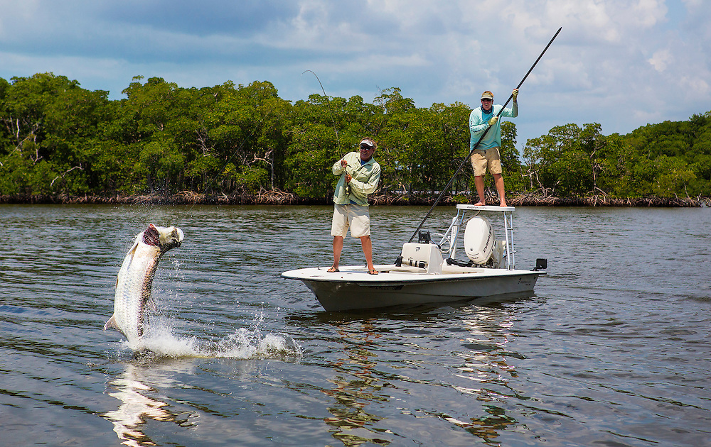 Fly fishing for tarpon in white water bay which is part for Fly fishing bay area