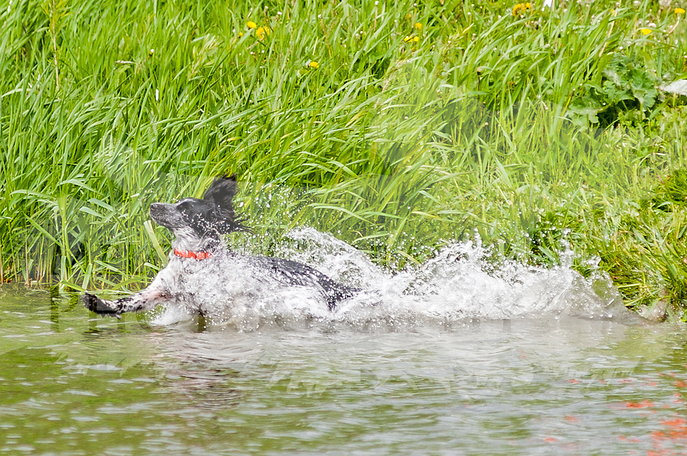 The photography was made at the Randy Cooley Memorial Hunt Test, which was held May 25-26, 2016,  at Rock River Kennels in Beaver Dam, WI.