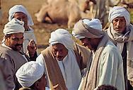 Camel Traders, Souq El Gimaal, Cairo, Egypt