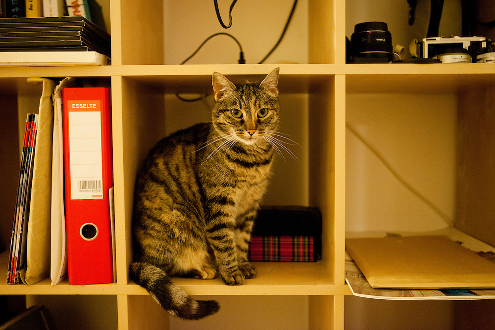 "Diary about a cat called ""Speedy"" living on the Czech country side close to Prague."