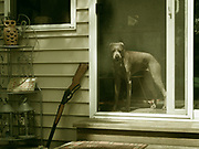 Sugar standing at the porch screen door with bb gun leaning outside