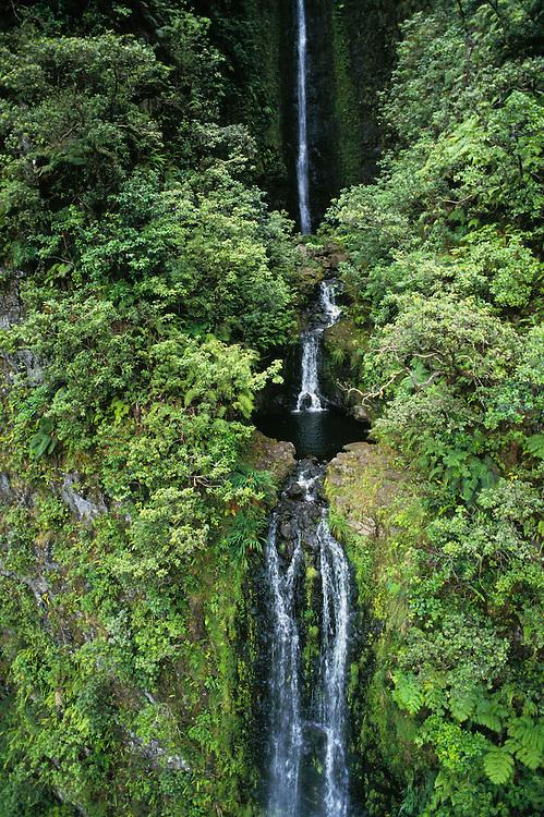 Waterfall and rainforest on valley wall; North Kohala coast, Island of Hawaii.
