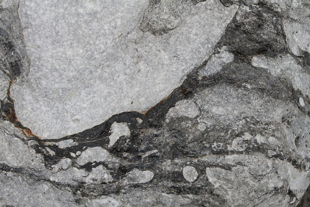 ....Kalkstein med fossiler ..Silur. 430 millioner år ..Porsgrunn ....------....Limestone with fossils..Silurian. 430 million years..Porsgrunn