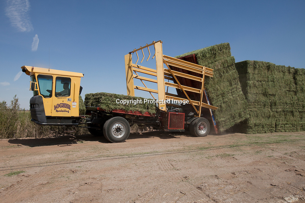 Trucks dropping off alfafa bales on the side of the road in Westmorland town, located in the Imperial Valley, California.