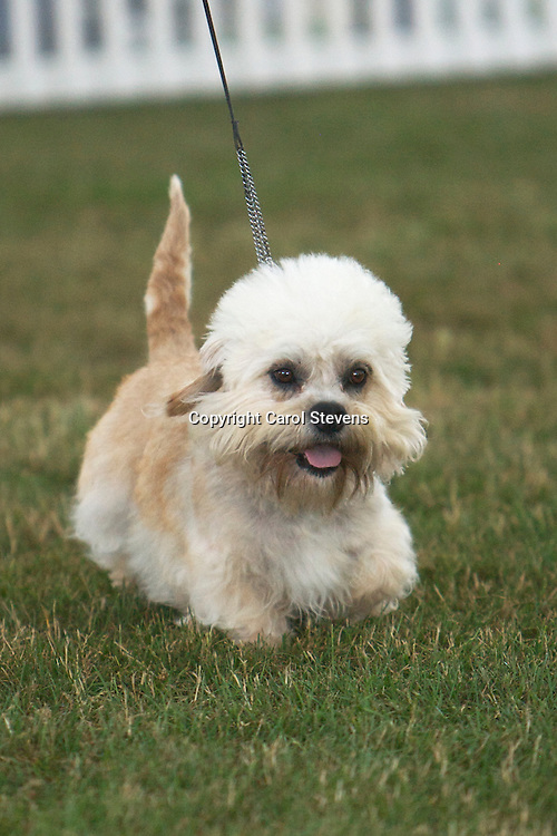 Ch Cloverwood Royal George<br />