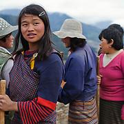A gruop of women farming in Gangtey valley, Bhutan, Asia