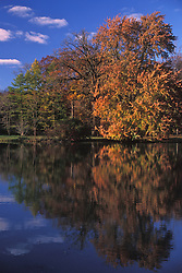 fall foliage, trees, color, reflections