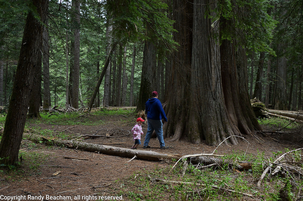 Father and daughter walking in the Ross Creek Cedars Research Natural Area. Cabinet Mountains in the Kootenai National Forest, northwest Montana.