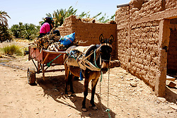 A donkey and cart working near Kasbah Ramala in southern Morocco<br /> <br /> (c) Andrew Wilson | Edinburgh Elite media