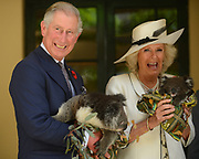 ALL_PUBS: ALL_PUBS: Prince Charles, Prince of Wales holds a koala called Kao while Camilla, Duchess of Cornwall holds a koala called Matilda handed to them by Rae Campbell, a volunteer from Fauna Rescue of SA, at Government House in Adelaide, South Australia 07 Nov 2012. The Royal couple are in Australia on the second leg of a Diamond Jubilee Tour taking in Papua New Guinea, Australia and New Zealand.