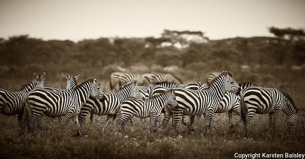 &ldquo;Stripes&rdquo;                                                         Tanzania<br />  I do so love the stripes of the zebra.