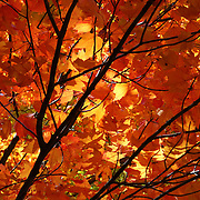"""Absorbed in Autumn""<br />
