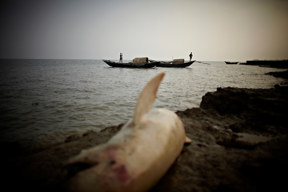 A dead dolphin lies on the shore of the Bay of Bengal on  Chaar Patilla..This area in the south of Bangladesh has been called ground zero of climate-change due to heavy river and ocean erosion. The lowlying area is also hugely affected by cyclones and rising sea-levels...By the Mouth of Ganges, at the Bay of Bengal is the Island of Bhola. This home of about two million people is considered to be ground zero of climate change. Half the island has disappeared in the past 40 years, and according to scientists the pace is not going to slow down. People pack up and leave as the water get closer. Some to a nearby embankment, while those with enough money move further inland, but for most life move on until the inevitable. It's always about survival for the people in one of the worlds poorest countries...Photo by: Eivind H. Natvig/MOMENT