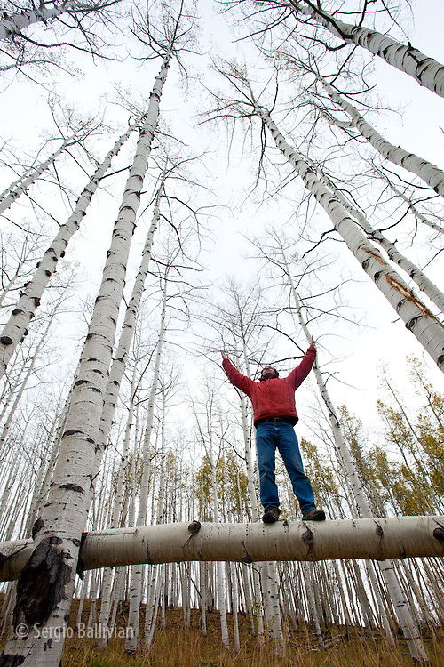 A man enjoys quiet time while balancing on a fallen Aspen tree near Crested Butte, Colorado.