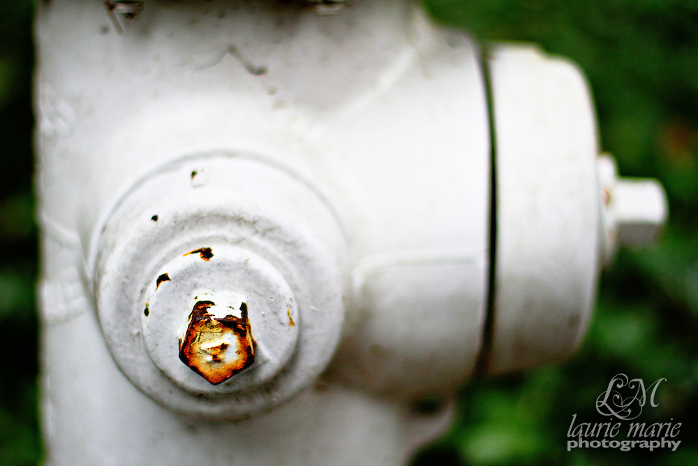 Fire hydrant closeup with a bird