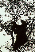 Wildlife: Black Bear