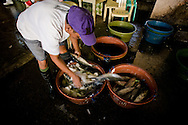 Philippines, Metro Manila. Huge fish market in Navotas - the best place to buy a fresh fish and seafood.