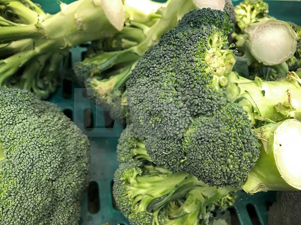 © Licensed to London News Pictures. 3/02/2017. Brighton, UK. Customers are restricted to three packets of broccoli only in a Morrisons supermarket.  UK supermarkets are struggling with demand for lettuce and other vegetables after poor weather hampered the supply from Europe . Photo credit: Hugo Michiels/LNP