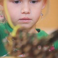 Maxton Pridgen, 5, makes a pine cone bird feeder Saturday December 20, 2014 during Nature Holiday Creations at Halyburton Park in Wilmington, N.C. (Jason A. Frizzelle)