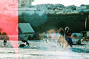 Double exposure, dogs, ravers and child at NYE party, France December 2011