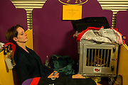 New York, NY - 16 February 2016. A woman follows the lead of her Welsh terrier and takes a rest prior to the evening judging in the benching area of the 140th Westminster Kennel Club Dog show in Madison Square Garden.