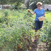 EMILY TUBB/MONROE JOURNAL FILE <br /> Jean Pinkley loads a basket with freshly picked tomatoes at Amory's community garden during the 2015 growing season.