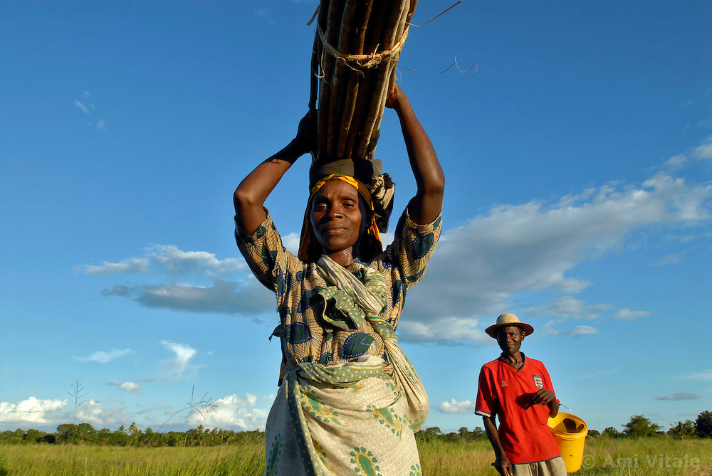 A Tanzanian woman walks from her field near sunset. The dense forest and tall grasses make villagers vulnerable to lion attacks. They have to stay late in the evening in their fields to protect their crops from rampaging monkeys who like to eat the rice and corn, forcing them to walk at sunset, the time of day when lions are out looking for prey.  Ami Vitale