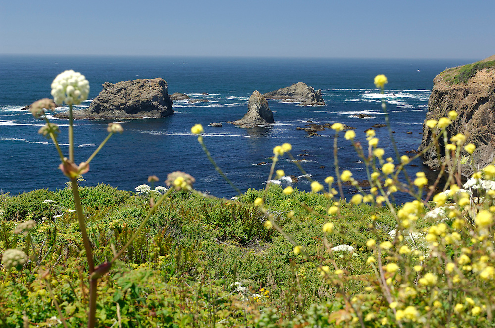 Flowers at Coast along Coastal Highway 1 near Fort Bragg, California, United States of America