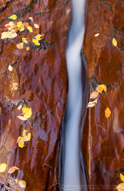 Water flowing through a crack in the red sandstone slickrock, Left Fork of North Creek, Zion National Park Utah USA