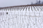 Easter in Southern Styria, Austria. Sausal in the snow. Vines.