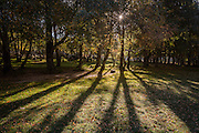 The shadows of backlit trees as the early morning sun rises through the woods at Covão da Ametade