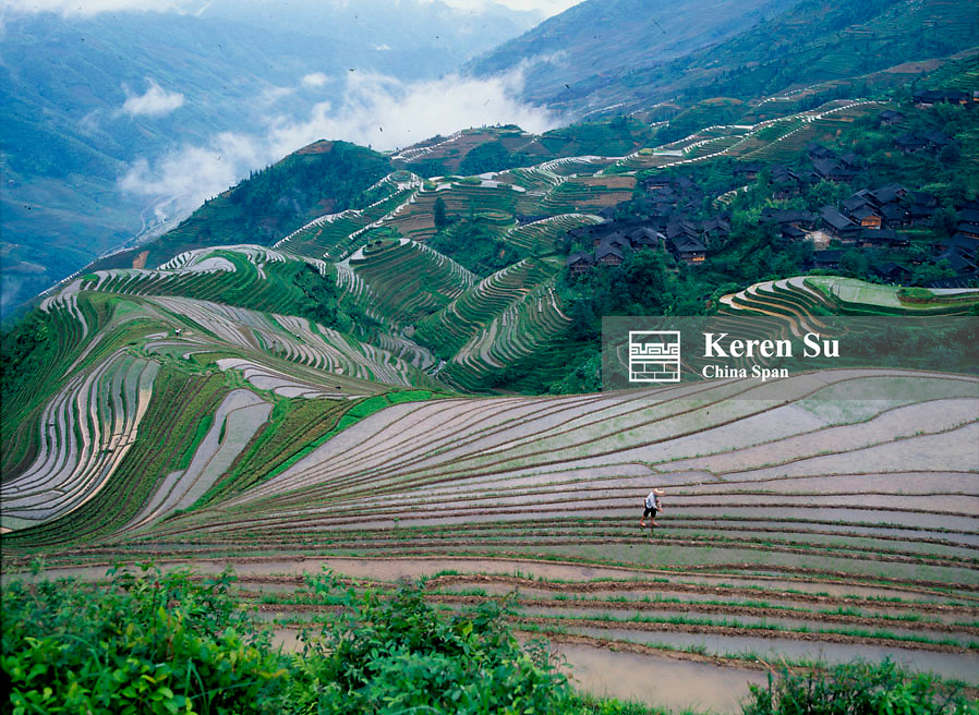 Farmer working on the water filled terraced rice paddy in the mountain, Longji, Guangxi Province, China