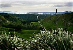 NEW ZEALAND OTOROHANGA 15DEC07 - Valley near Otorohanga, northern island, New Zealand...jre/Photo by Jiri Rezac..© Jiri Rezac 2007..Contact: +44 (0) 7050 110 417.Mobile:  +44 (0) 7801 337 683.Office:  +44 (0) 20 8968 9635..Email:   jiri@jirirezac.com.Web:    www.jirirezac.com..© All images Jiri Rezac 2007 - All rights reserved.