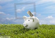 Sparschwein steht in Wiese, mit Geldschein