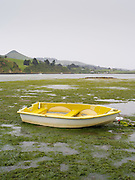 A small, yellow rowboat sits on the bottom of the bay, on algae and rocks, as the tide has gone out from underneath it.  Portobello Bay, Otago Peninsula, near Dunedin, Otago, New Zealand, on a grey day
