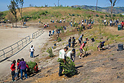Volunteers at a  Tree planting to reforest Stetson Ranch Park in Sylmar after the 2008 devastating wildfire. Organizations such as LA Conservation Corps, Tree People, North East Trees joined Million Trees LA and other volunteers to plant 150 trees to celebrate Earth Day 2009. California, USA.
