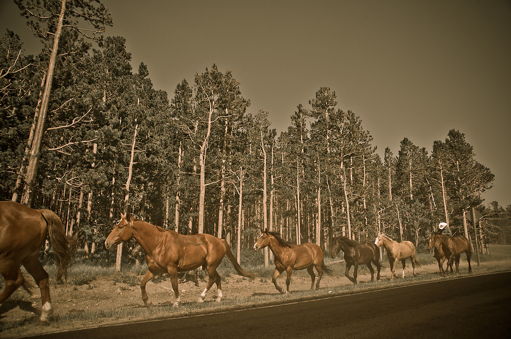 Cowboy and herd of horses on the roadside