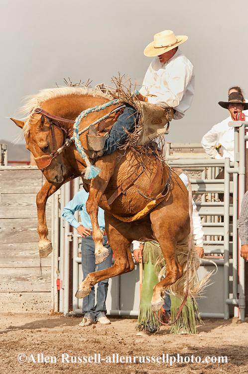 Ranch Rodeo, Ranch Bronc Riding, Hardin, Montana, Quinn Larsen.