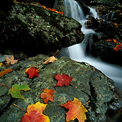 Williamstown, MA. Fall leaves and Money Brook Falls.  Mount Greylock State Reservation.