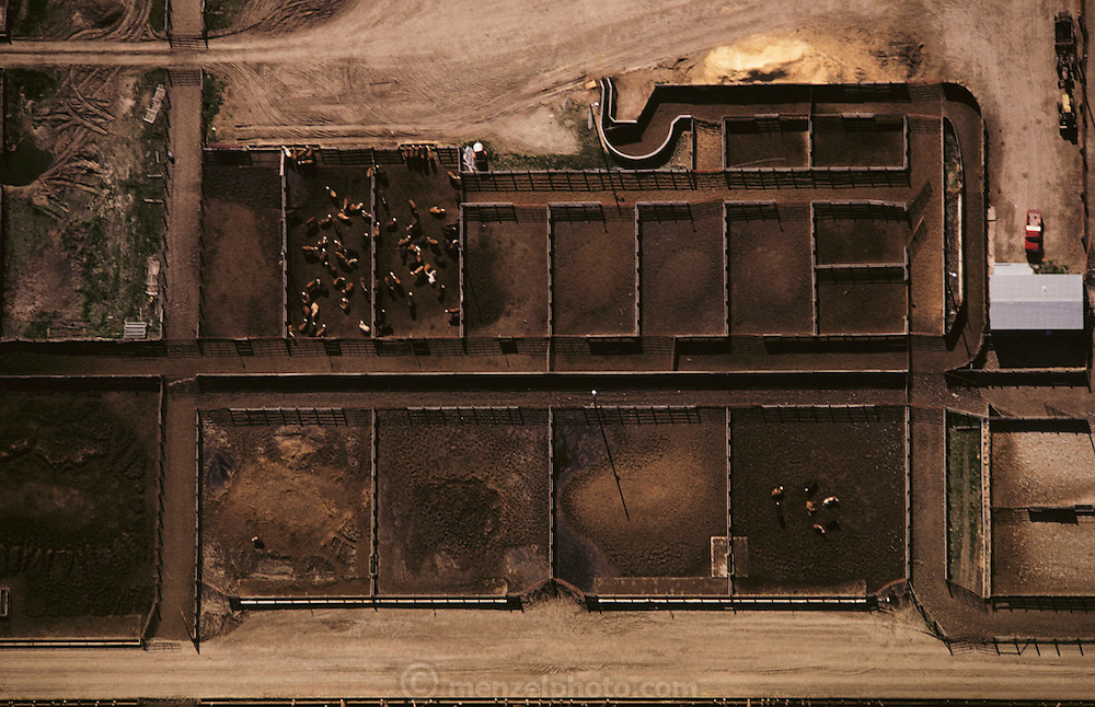 Aerial photograph of J.R. Simplot cattle feedlot near the J.R. Simplot potato processing plant in Idaho. The cattle are fattened on grain and also on potato waste. J.R. Simplot company is the largest supplier of French fries to McDonald's fast food company. USA